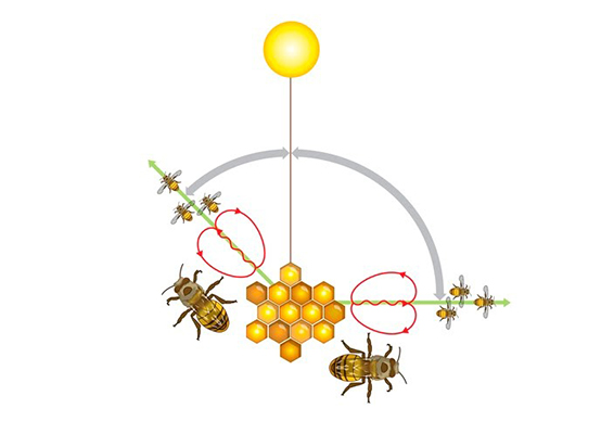 What bees can teach us about marketing